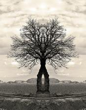 "EXPO ""TREES OF LIFE"""